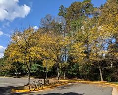 Autumn Locust - Ride 139