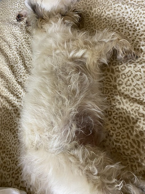Photo:Doggy fur pillow against cheetah fabric By moccasinlanding