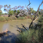 Isisford area, Yuranigh Ponds IMG_8540