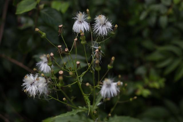 Photo:Fall Flowers By pasa47