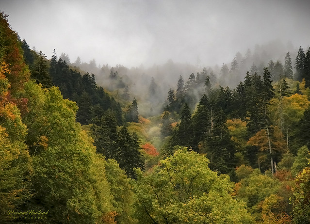 Photo:Misty trees and colors By Angelrays