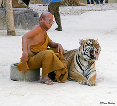 Thai Countryside 2006