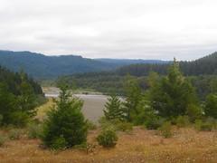 Immortal Tree - Humboldt County, CA