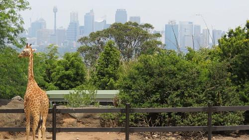Taronga Zoo, Sydney (483464)