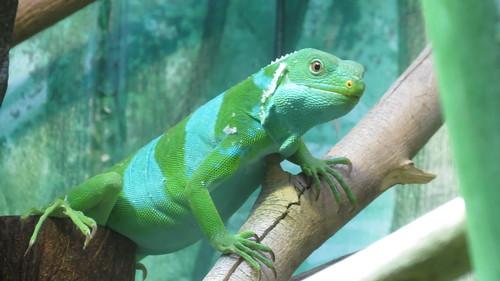 Taronga Zoo, Sydney (483482)