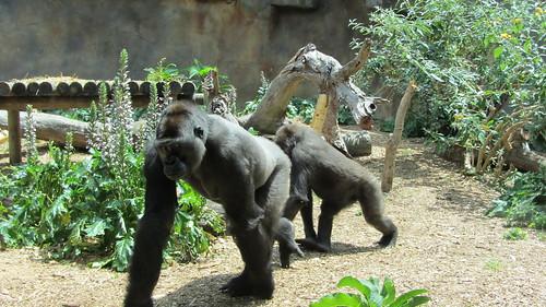 Taronga Zoo, Sydney (483454)