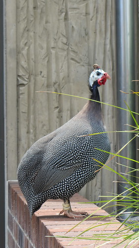 Taronga Zoo, Sydney (483474)