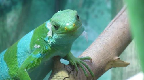 Taronga Zoo, Sydney (483483)